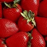 Сбор клубники — вкуснейшего фрукта, выращиваемого в Польше